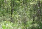 Bonner Revegetation 5