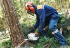 Bonner Tree cutting services 21